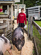 26 JUNE 2019 - CENTRAL CITY, IOWA: DAWSON BECKER pushes his pigs to the swine check in area at the Linn County Fair. Summer is county fair season in Iowa. Most of Iowa's 99 counties host their county fairs before the Iowa State Fair, August 8-18 this year. The Linn County Fair runs June 26 - 30. The first county fair in Linn County was in 1855. The fair provides opportunities for 4-H members, FFA members and the youth of Linn County to showcase their accomplishments and talents and provide activities, entertainment and learning opportunities to the diverse citizens of Linn County and guests.       <br /> PHOTO BY JACK KURTZ