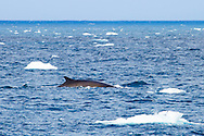 Animal, water, fin.<br /> MG5243