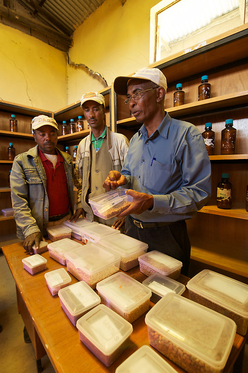 The Ejere Farming Community Seed Bank in Ejere, Ethiopia was built by Ethio Organic Seed Action to help farmers regain traditional local varieties of grain that are better adapted to their location. Seed bank members donate seeds and in turn get seeds from the seed bank. Regassa Feyissa with EOSA is one of the founders and promoters of the seed bank and helps the local farmers. <br /> <br /> The germplasm reserve saves a wide variety of crops that may not be grown every year and acts as a safety net in case of crop failure. <br /> <br /> Farmers seen in the seed bank with Regassa are Taddesse Retta, chair of the Farmer Conservator Association and Eshetu Badada, the treasurer. <br /> <br /> <br /> Contact:  Regassa Feyissa<br /> Ethio Organic Seed Action (EOSA)<br /> eosa1@ethionet.et<br /> reg_fey@hotmail.com<br /> Tel: +251 11 5 50 22 88<br /> Mobile: +251 911 24 83 40<br /> Addis Ababa, Ethiopia