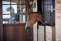 Carroll Enda, (IRL)<br /> Ashford Farm - Bocholt 2015<br /> © Hippo Foto - Dirk Caremans<br /> 01/07/15