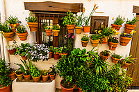 Flowers and plants in pots in the whitewashed mountain village of Capileira (the second highest in Spain), Las Alpujarras, Sierra Nevada Mountains, Granada Province, Andalusia, Spain.