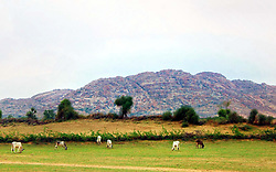 July 24, 2017 - Pakistan - UMARKOT, PAKISTAN, JUL 24: Eye-catching and very fascinating views of Karoonjhar Hills .after downpour of monsoon season in Tharparkar district near Umarkot on Monday, July 24, .2017. (Credit Image: © PPI via ZUMA Wire)