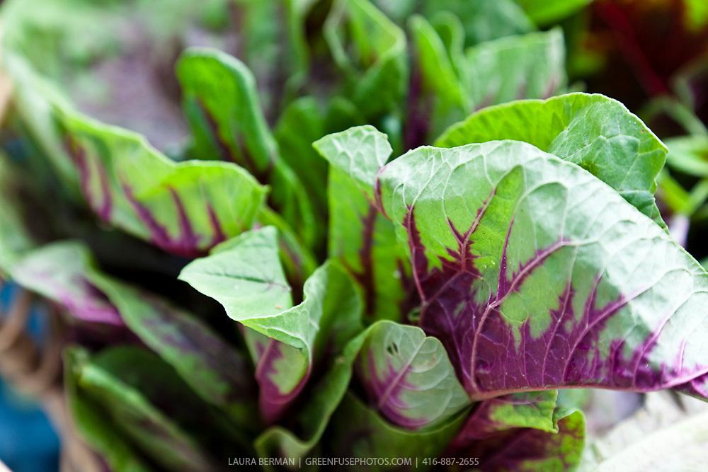 Purple and green Asian amaranth greens.