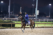 November 1-3, 2018: Breeders' Cup Horse Racing World Championships. Miss Sunset