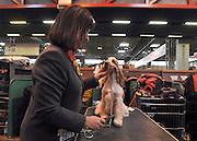 London News pictures. 10/03/11. Exhibitiors and their dogs at Crufts 2011 held at The National Exhibition Centre in Birmingham today (Thurs). The show runs from 10 - 13 March 2011 Picture Credit should read Stephen Simpson/LNP