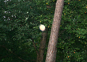 A bright sunlike orb floating up in the hardwoods, ringed by energy tendrils, similar to tiny solar flares.