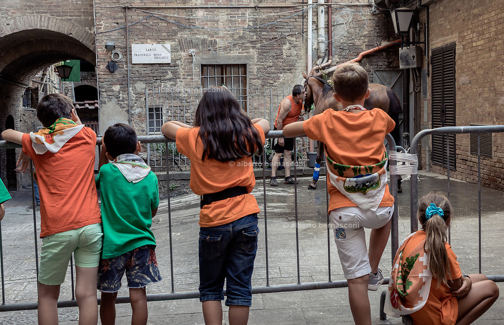 Italy, Siena, the Palio: after the morning trial la Povraccia, horses go back to the stable which is in the heart of the contrada; here it gets the last attention for the race, kids use to follow every single step of the Palio with huge passion and involvement