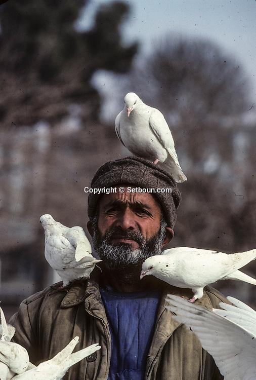 Afghanistan. White pigeon in front of the big mosk of   Mazar I Sharif  Afghanistan     / Pigeons blanc devant la grande mosquee de Mazar I Sharif  Mazar I Sharif  Afghanistan