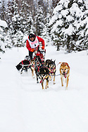 Musher John Erhart competing in the Fur Rendezvous World Sled Dog Championships at Campbell Airstrip in Anchorage in Southcentral Alaska. Winter. Afternoon.