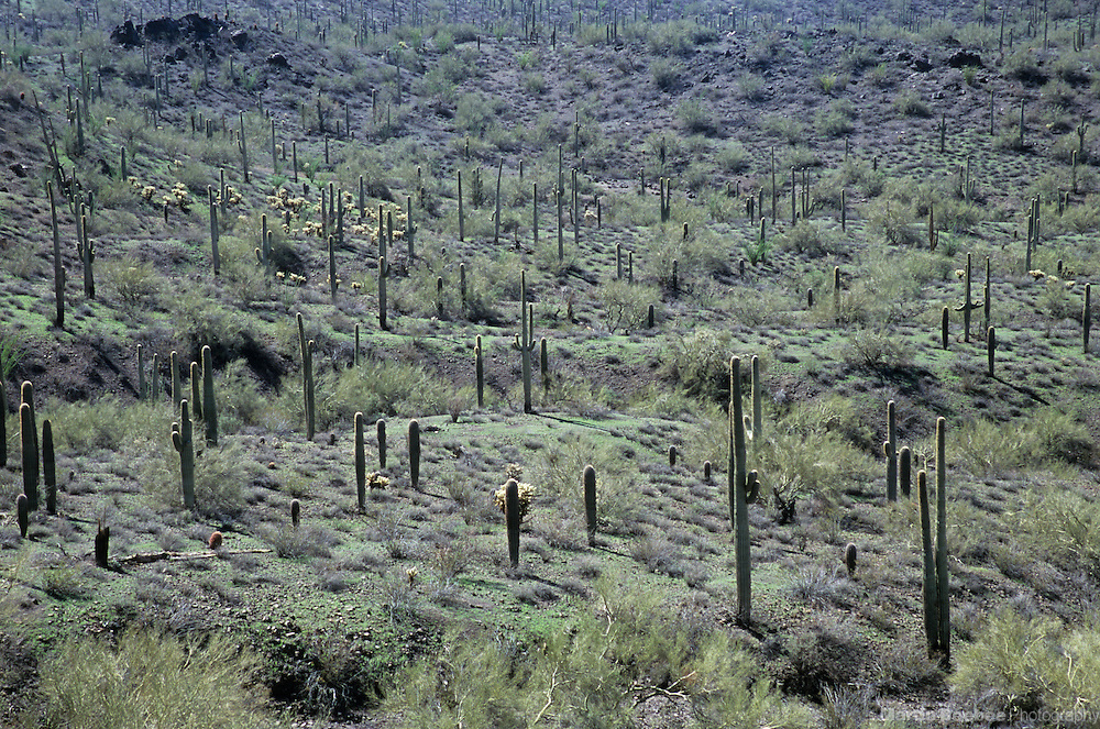 Sonoran desert floor, Picacho Peak State Park, Arizona