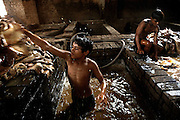 Two young boys are collecting skins from a bath during the process of liming, the removal of hair and impurities with the use of water and various agents, in an illegal tannery unit inside Jajmau Industrial Area, Kanpur, Uttar Pradesh. Children are largely employed to work on scraps, or little pieces of skin, like the head and the ears of the animal, which will become a small bag, a wallet, or maybe a cheap phone leather case.
