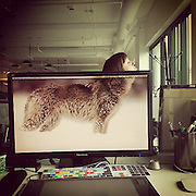These Coworkers are Adding their Heads to Animals on Each Other's Desktop Backgrounds<br /> <br /> Nothing makes the day go faster than a little fun at the office with your coworkers! It all started when Mike Whiteside was at his desk and noticed that when he peered over his screen all he could see of his coworker was his head.<br /> He quickly changed his desktop background to an animal, splicing his coworker's head onto the body of various animals.<br /> ©Desk Safari/Exclusivepix Media