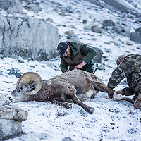 bighorn sheep hunting mountains horsesback hunting