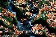 Seasonal Flow<br /> Tongue Mountain, Lake George, NY