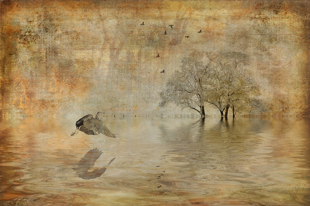Golden beige toned tranquil scene of a heron swooping over water ripples