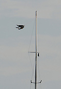 A United Internet Team Germany sailor is swung like a rag doll after losing his grip while up the mast of GER72. Louis Vuitton Act 6. Malmo, Sweden. 26/8/2005