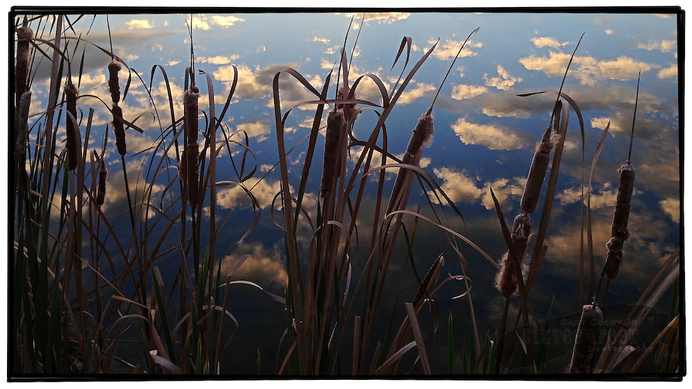 Gary Cosby Jr.  iPhone photographs  Cattails frame clouds reflected in a lake in Morgan County, Alabama.