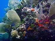 Scuba Diving, Key Largo
