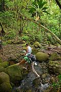 Lulumahu Valley, Nuuanau, Oahu, Hawaii
