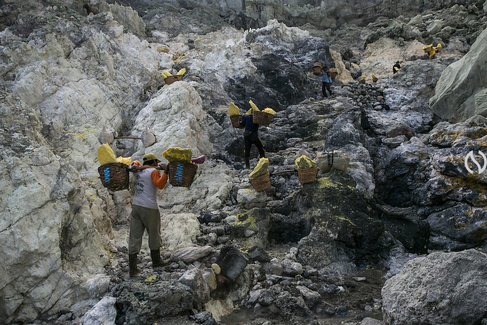 BONDOWOSO, EAST JAVA - DECEMBER 17: Sulfur miners bearing a full pair of sulfur basket climb up Ijen crater during annual sacrificial ritual in Bondowoso, East Java, Indonesia, December 17, 2013. The miners held the sacrifice in order to ask blessing of good result and prevent from accident or injury. The tradition begun in 1978 after a tragedy that killed four people and fourteen black out cause of poisoning gas. Daily miners produce fifteen ton of sulfur or approximately 450 ton a month. Come close to 150 miners work everyday. All the sulfur goes to sugar factory ans used as sugar whitening.