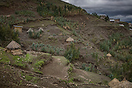 "Ethiopia is a densely populated country with a population of over 100 million.  This has led to land use problems in the highlands where occupying steep slopes, unsuited to agriculture, leads to barren ground and erosion.  An attempt to reforest slopes denuded long ago with fast growing eucalyptus from Australia has met with some success but the trees, planted mostly by individual farmers are rarely allowed to grow trunks larger than pole size, then chopped down (and sold for construction of traditional found ""tukul"" houses, barns or for firewood.  Ethiopian Highlands."