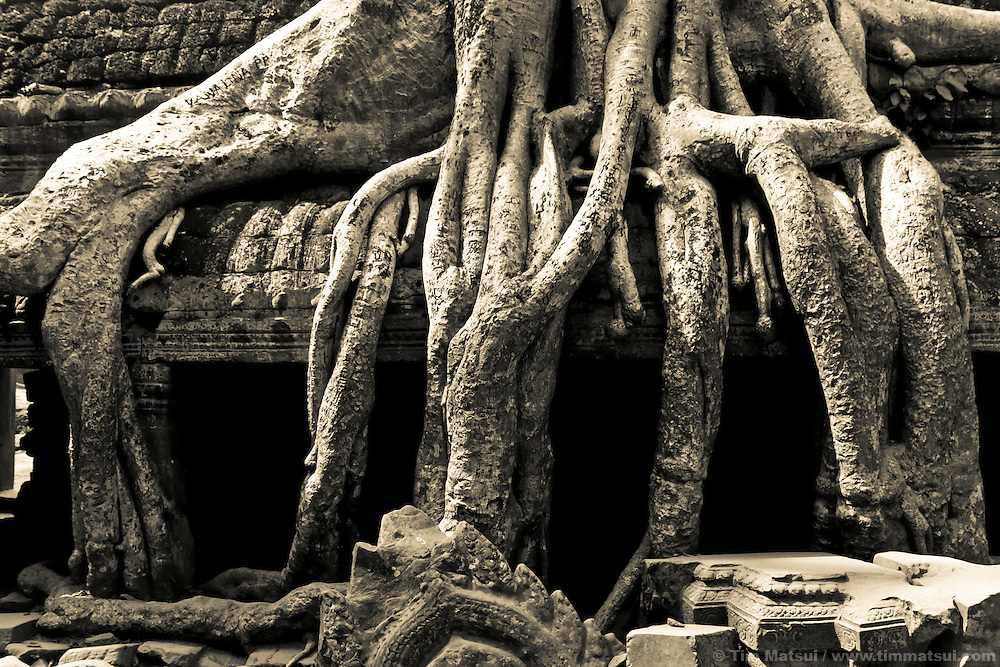The ancient Tah Prom temple, part of the Angkor Wat complex in Siem Reap, Cambodia, where trees have grown over the temple's stone works.