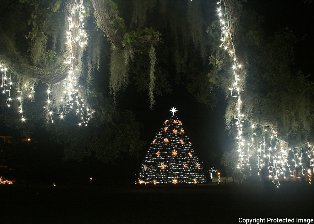 Jekyll Island Christmas tree and ancient oaks decorated with white Christmas lights
