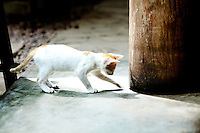 Kitten at play with shadow in Vigan, Philippines. Copyright 2015 Reid McNally.