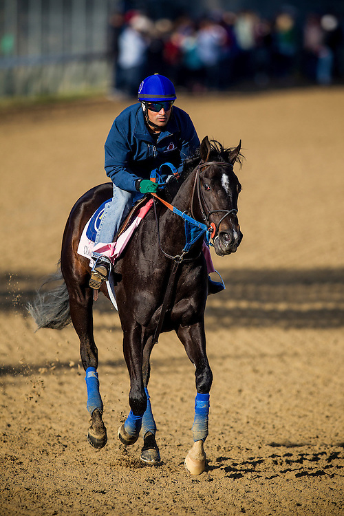 April 29, 2015: Condo Commando gallops in preparation for the Kentucky Oaks at Churchill Downs Louisville Ky. Alex Evers/ESW/CSM