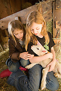 Sisters, 7 year old Kelsey Epp (left) and 9 year old Shenoa Epp, hold a three day old lamb on a Sauvie Island farm, Oregon. Model and property released.