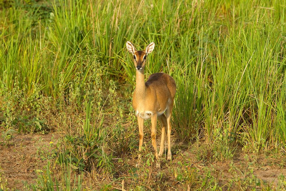 Murchison Falls Park, Uganda