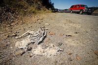 JEROME A. POLLOS/Press..Dead on mountain goat alongside Highway 97 near the Beauty Creek boat launch.