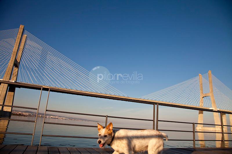 Vasco da Gama Bridge. Lisbon. Portugal ©Carlos Sanchez Pereyra / PILAR REVILLA