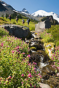 Hikers enjoy Lewis's Monkeyflower blooming along a sparkling creek on the Wonderland Trail to Summerland in Mount Rainier National Park, Washington, USA. Published in 2011 by National Geographic Digital Media on the NG Adventure site adventure.nationalgeographic.com