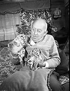 08.09.1984<br /> 09.08.1984.<br /> 8th September 1984<br /> Chipperfield's circus performed before packed houses in Mullingar, Co Westmeath.<br /> <br /> Picture shows Mr Dick Chipperfield with tiger cubs which were born shortly after the circus arrived in town. The cubs were only one hour old when this picture was taken.