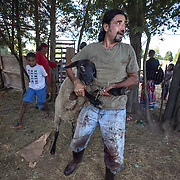 "DUMFRIES, VA - SEP12:  Mian Ahmal Shah, the owner of Shah Farm, carries the sheep the Elsanousi family picked out, to be slaughtered in honor of Eid al-Adha, the ""Feast of the Sacrifice"", September 12, 2016 in Dumfries, Virginia. Shah farm sells animals for Muslims holidays and slaughters meat in the Halal tradition. (Photo by Evelyn Hockstein/For The Washington Post)"