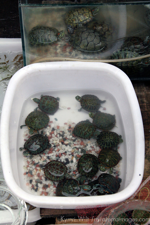 Asia, China, Chongqing. Small turtles for sale in local street market in the city of Chongqing.