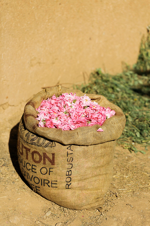 After picking for a few hours, the farmers take their harvest to be weighed at a local scale. The weighing scales are often located besides small boutique shops inside the villages, with communal water drinking cups for the workers to take a break. While some flowers will be dried for sale as decorative items and added to dried fragrant perfume mixes and teas, the main bulk of the harvest are used to make rose water and rose oil. High in essential vitamins like vitamin E, A, & B3, as well as being rich in anti-oxidants, flavonoids and tannins, rose water is thought to have have many natural healing properties and is mainly known for its benefits to skin care.