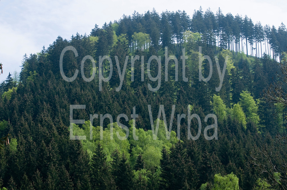 Mischwald im Frühling im Siebertal, Harz, Niedersachsen, Deutschland | spring forest in Sieber valley, Harz, Lower Saxony, Lower Saxony, Germany