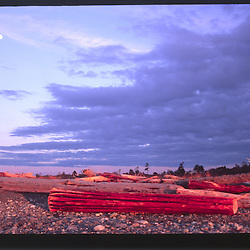 Dusk Moonrise Over Driftwood at Dungeness Spit, Dungeness National Wildlife Refuge, Olympic Peninsula, Washington, US