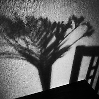 Shadows of flowers on a wall