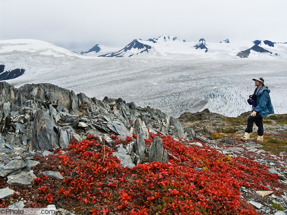 Photographer Tom Dempsey admires tundra foliage turning red in early September above the Harding Icefield, in the Kenai Mountains, Kenai Fjords National Park, Alaska, USA. The only road into Kenai Fjords National Park is a spur of the Seward Highway to Exit Glacier, one of the most visited glaciers in Alaska. Exit Glacier was named after the exit of the first recorded crossing of Harding Icefield in 1968. A trail ascends alongside Exit Glacier to overlook its source in the Harding Icefield. For licensing options, please inquire.