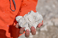 Close up of a girl's hand  holding fossils of shells in limestone in Big Cypress National Preserve. Model released.
