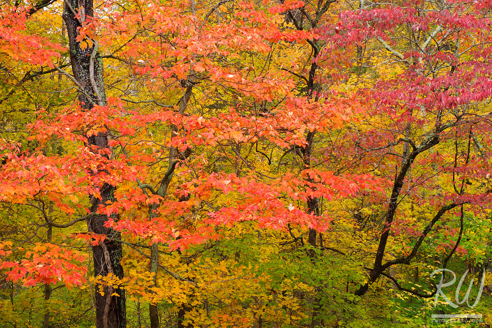 Autumn Tapestry at Bernheim Forest, Bullitt County, Kentucky
