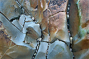 Abstract Colors, Lines, and Shapes, in Tidal Rock, LaPush Beach Three