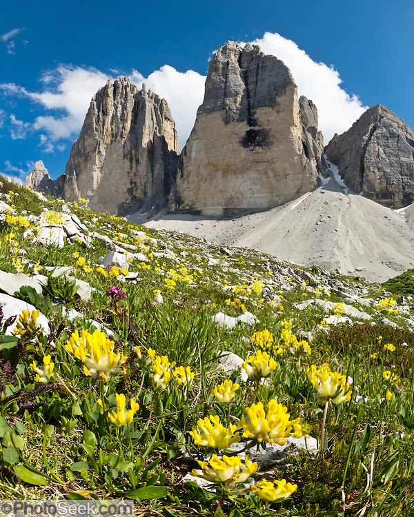"Yellow flowers bloom beneath Tre Cime di Lavaredo (Italian for ""Three Peaks of Lavaredo,"" also called Drei Zinnen or ""Three Merlons"" in German), which are distinctive icons of the Alps, in the Sexten Dolomites of northeastern Italy, Europe. Until 1919 the peaks formed part of the border between Italy and Austria. Now they lie on the border between the Italian provinces of South Tyrol and Belluno and still are a part of the linguistic boundary between German-speaking and Italian-speaking majorities. Cima Grande rises to 2999 meters (9839 feet), between Cima Piccola  2857 m (9373 ft) and Cima Ovest  or ""Western Peak"" 2973 m (9754 ft). The Dolomites were declared a natural World Heritage Site (2009) by UNESCO. Panorama stitched from 4 overlapping photos."