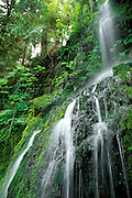 Cascade along the east fork of the Quinault River, Quinault Rain Forest, Olympic National Park, Washington USA