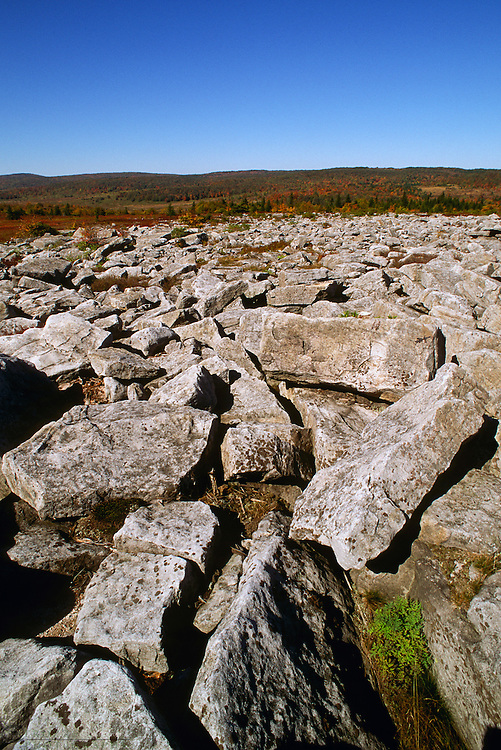 Rock formations make footing treacherous at The Dolly Sods wilderness, West Virginia. Dolly Sods is on a ridge crest that forms part of the Eastern Continental Divide. Is the highest plateau of its type east of the Mississippi River with altitude ranging from around 4,000 feet to about 2,700 feet..