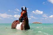 Man Washes his horse in the Mediterranean Sea