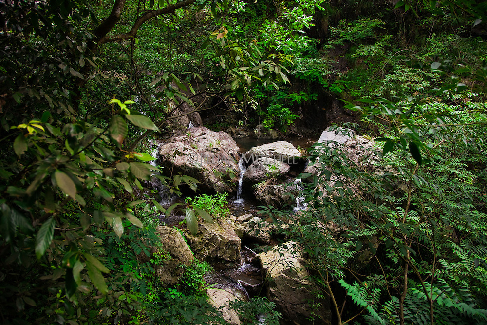 Huangliangshan scenic spot in Zhejiang contains a series of beautiful waterfalls amongst verdant forest.